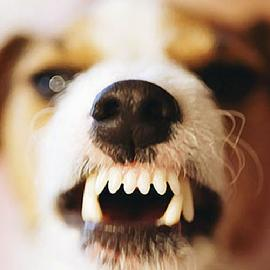 help my dog is biting people, my dog is aggressive, why does my dog bite people, how can I stop my dog from biting people, my dog is aggressive toward other dogs, my dog is aggressive toward people, how do help an aggressive dog, can dogs be cured of aggression